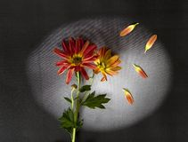 Carta di condoglianza - fiori rossi Immagine Stock Libera da Diritti