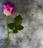 Carta di condoglianza - la viola è aumentato su marmo Fotografia Stock Libera da Diritti