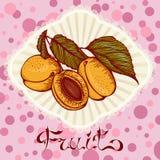 Carta di disegno di colore delle albicocche Fotografie Stock
