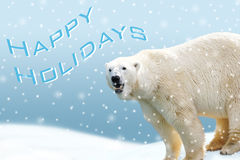 Carta di festa dell'orso polare Fotografia Stock