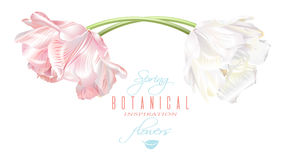 Carta di orizzontale del tulipano Fotografie Stock Libere da Diritti