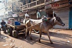 Carta do BOI nas ruas estreitas de Deli velha Fotografia de Stock