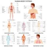 Carta do sistema diferente do órgão humano ilustração stock