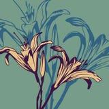Carta floreale d'annata con i gigli illustrazione di stock