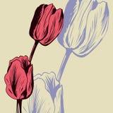 Carta floreale d'annata con i tulipani illustrazione vettoriale