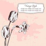Carta floreale d'annata con i tulipani ed il narciso illustrazione vettoriale