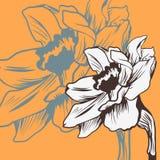 Carta floreale d'annata con il narciso illustrazione di stock