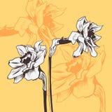 Carta floreale d'annata con il narciso royalty illustrazione gratis