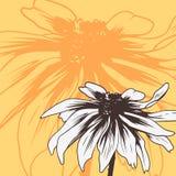 Carta floreale d'annata con la camomilla royalty illustrazione gratis