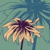 Carta floreale d'annata con la camomilla illustrazione di stock