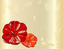 Carta incrinata d'annata con i papaveri rossi disegnati a mano Fotografia Stock