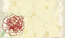 Carta incrinata d'annata con la peonia disegnata a mano Fotografia Stock Libera da Diritti