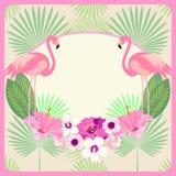 Carta, invito, menu, carta, insegna, spazio per testo con Ara Macao Parrot & foglie di palma annata Vettore illustrazione di stock