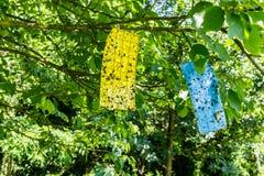 Carta moschicida su un ramo del frutteto per agricoltura biologica Fotografia Stock Libera da Diritti