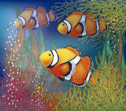 Carta subacquea con i clownfish Immagine Stock