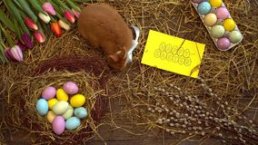 Carta tradizionale di vista superiore di concetto di simbolo del coniglio di celebrazione lanuginosa di pasqua