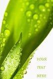 Carta verde conceptual imágenes de archivo libres de regalías