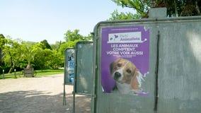 Cartaz com a cara do cão na eleição ensolarada verde do parque vídeos de arquivo