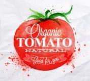 Cartaz da aquarela do tomate Imagens de Stock