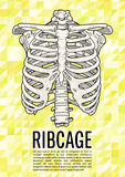 Cartaz de Ribcage Foto de Stock