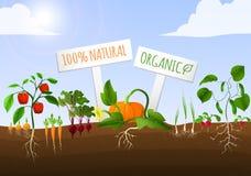 Cartaz do jardim vegetal Foto de Stock Royalty Free