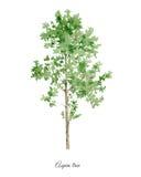 Cartaz Handpainted da aquarela com árvore do álamo tremedor ilustração royalty free