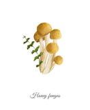 Cartaz Handpainted da aquarela com fungo de mel ilustração stock
