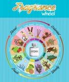 Cartaz infographic da roda do guia da fragrância do aroma ilustração do vetor