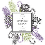 Cartaz tirado mão das flores do vetor Arte botânica gravada Ilustração do vintage Blosso do jacinto e das plantas carnudas, da mo Foto de Stock