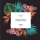 Cartaz tirado mão das plantas tropicais de Vecotr Folhas e flores gravadas exóticas Monstera, folhas de palmeira do livistona, bi Imagens de Stock Royalty Free
