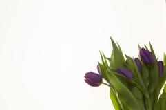 Carte avec des fleurs pour épouser l'anniversaire d'invitations Fond pour la carte de voeux avec des tulipes de fleurs Photos libres de droits