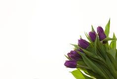 Carte avec des fleurs pour épouser l'anniversaire d'invitations Fond pour la carte de voeux avec des tulipes de fleurs Photographie stock libre de droits