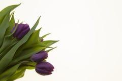 Carte avec des fleurs pour épouser l'anniversaire d'invitations Fond pour la carte de voeux avec des tulipes de fleurs Photo libre de droits