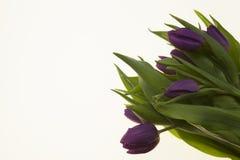 Carte avec des fleurs pour épouser l'anniversaire d'invitations Fond pour la carte de voeux avec des tulipes de fleurs Image stock