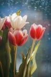 Carte avec des tulipes Image stock