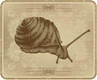 Carte avec l'escargot, retrait de main. Photographie stock
