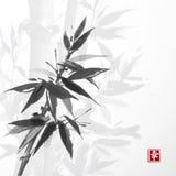 Carte avec le bambou sur le fond blanc Photo libre de droits
