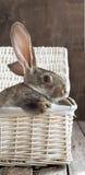 Carte avec le cadre et lapins dans un panier blanc Photo stock