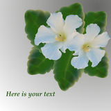 Carte avec le vecteur de fleur de mauve blanche créé par la maille Photo stock