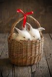 Carte avec les lapins blancs de couples dans le panier Photos libres de droits