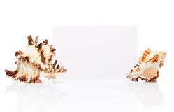 Carte blanche vierge de visite avec deux coquilles de mer d'isolement Photographie stock