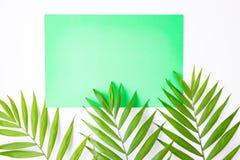 Carte bleue vierge sur les palmettes tropicales, concept de vacances d'?t?, disposition de calibre pour ajouter votre conception  photos stock