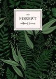 Carte botanique dans le style de vintage Photographie stock libre de droits
