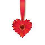 Carte cadeaux de coeur de jour de valentines Fleur avec le ruban Photos stock