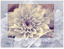 Carte - chrysanthème bleu dans le cadre Image stock