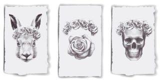 Carte con le rose, il coniglio ed il cranio royalty illustrazione gratis