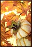 Carte décorée pour le thanksgiving Image stock