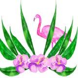 Carte d'aquarelle des feuilles tropicales et du flamant rose d'isolement sur le fond blanc Image libre de droits