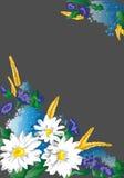 Carte d'illustration avec les fleurs sauvages Image stock