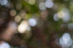 Carte da parati ed ambiti di provenienza di struttura della natura del bokeh di Blure Fotografia Stock